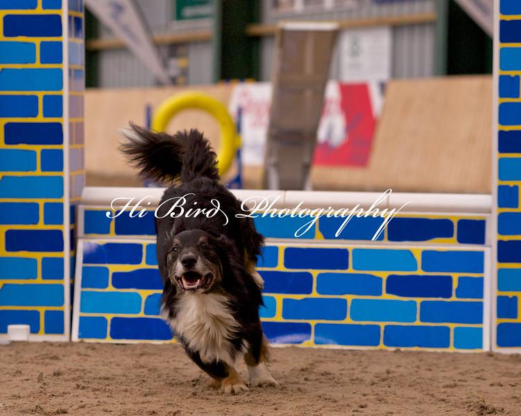 medium dog agility 1148.jpg