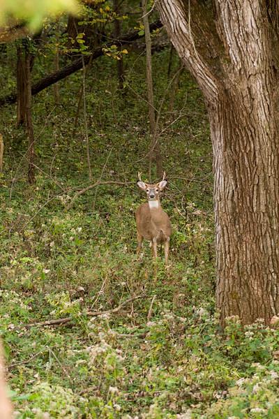 clip-015-deer-wdsm-01oct10-8420.jpg