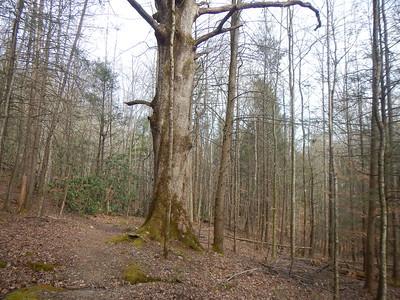 March 24-26 Chestnut/Balsam/Baxter Big loop