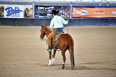 OPEN BRIDLE SPECTACULAR REINING PHASE