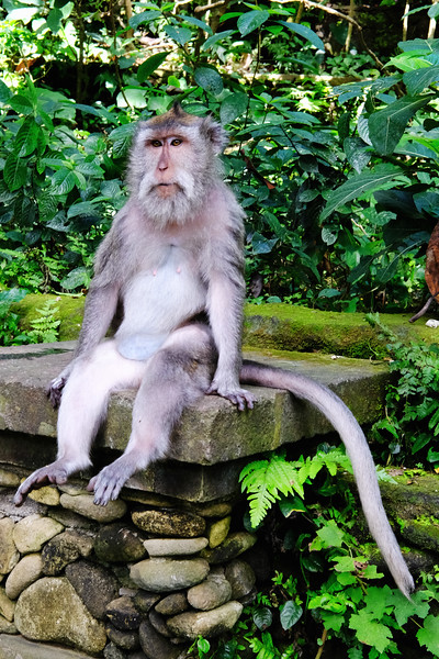 monkey-bali.jpg