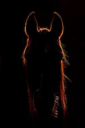 Horses in Art. Los caballos en el arte.
