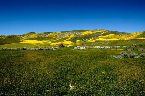 Carrizo Plain National Monument Collection