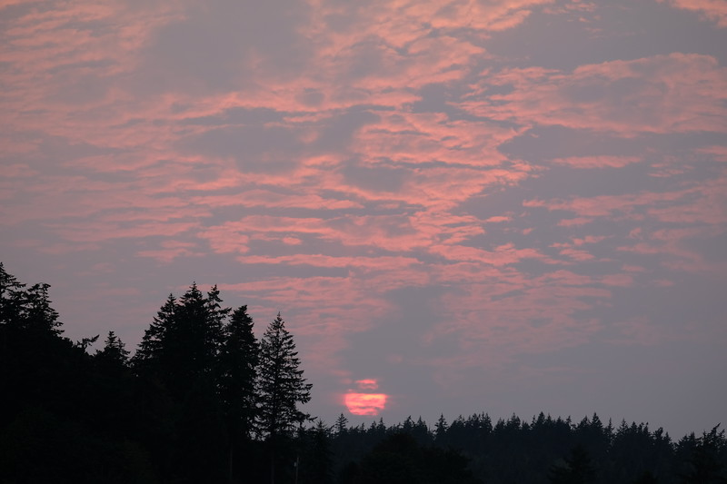 Deception Pass Cloudy Sunset Trees.JPG