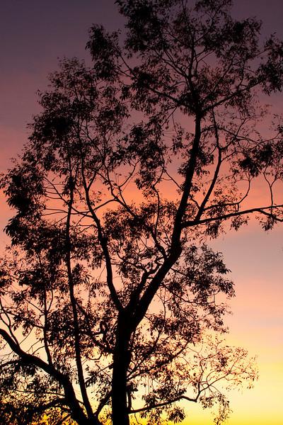 Silhouette Tree Sunset