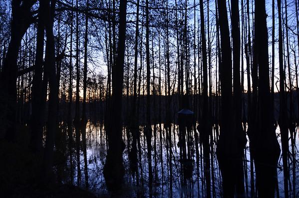 Southern Cypress Swamp 03/17/13