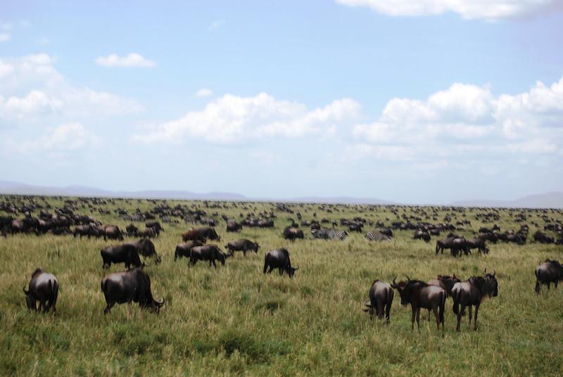 Serengeti (63).JPG