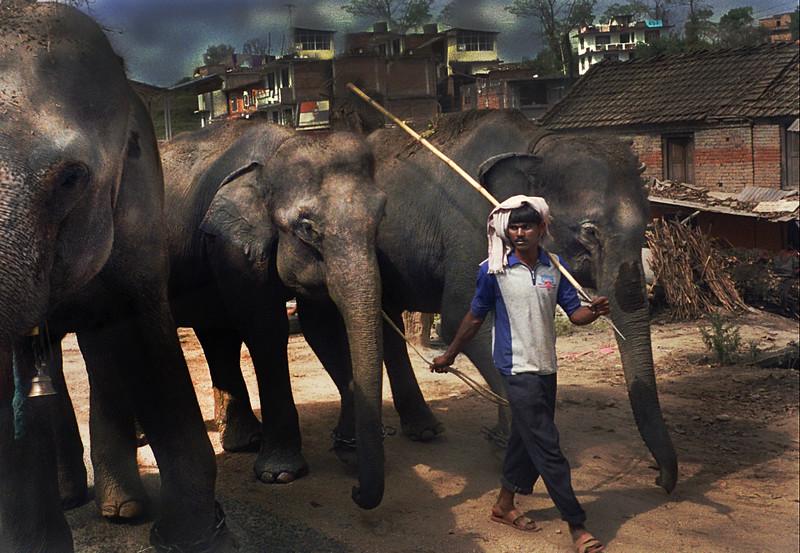 Nepalese Elephant Man.jpg