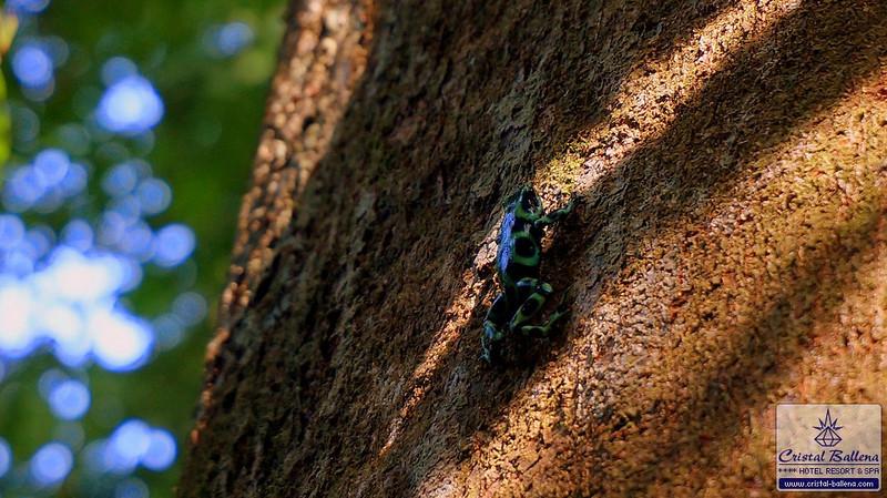Nature-frog2_0600px-wm.jpg
