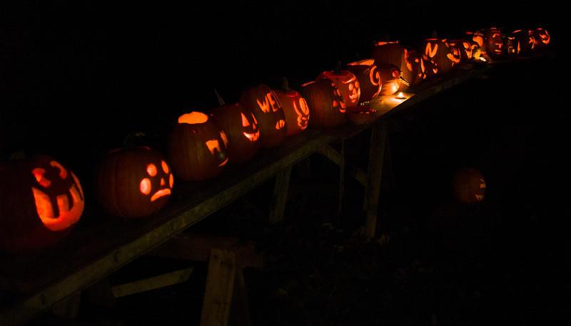 Pumpkins (Jacks O'Lantern?) arrayed for judging.