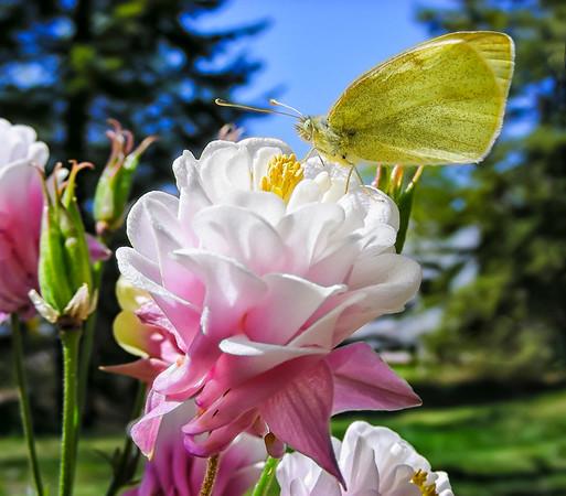 Bloom & Butterfly