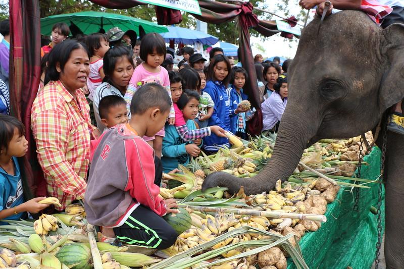 2014-11-14 Surin Elephant Welcome Feast 333.JPG