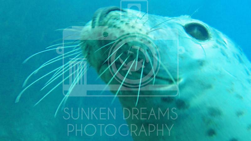 Lundy Island Edit.Still086.jpg