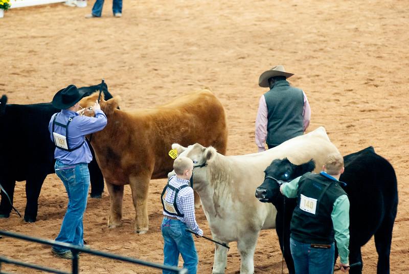american_royal_cattle-26.jpg