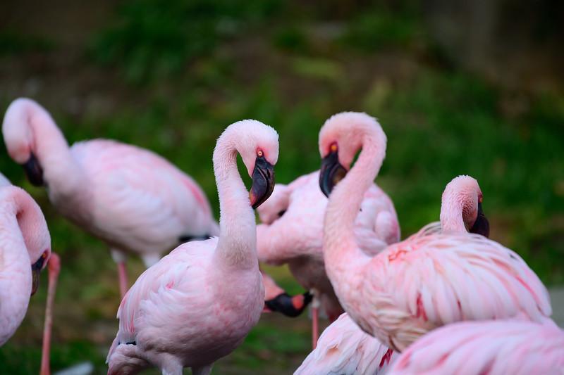 Oakland Zoo-71192-10.jpg