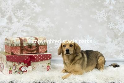CCC Christmas