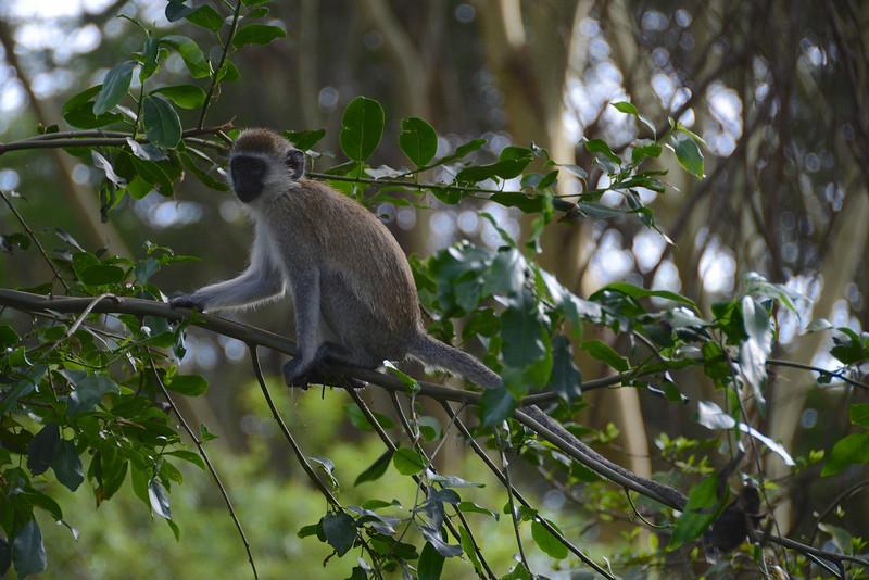 East Africa Safari 470.jpg