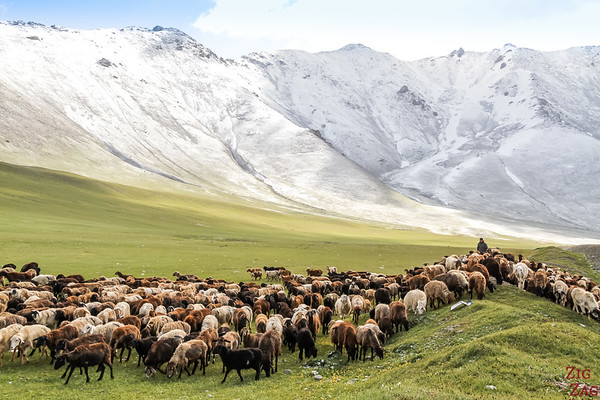 Traffic Jam in Kyrgyzstan