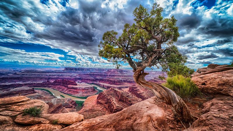 Tree over the River Colorado.jpg
