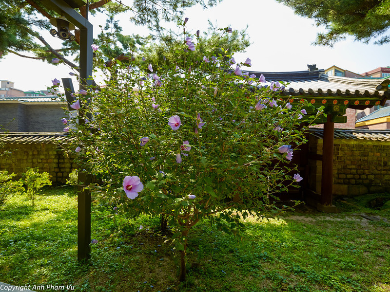 Uploaded - Seoul August 2013 243.jpg