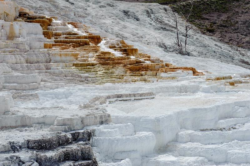 20130511-12 Yellowstone 109.jpg