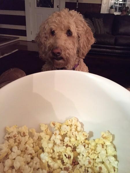 Winnie and popcorn #1.jpg