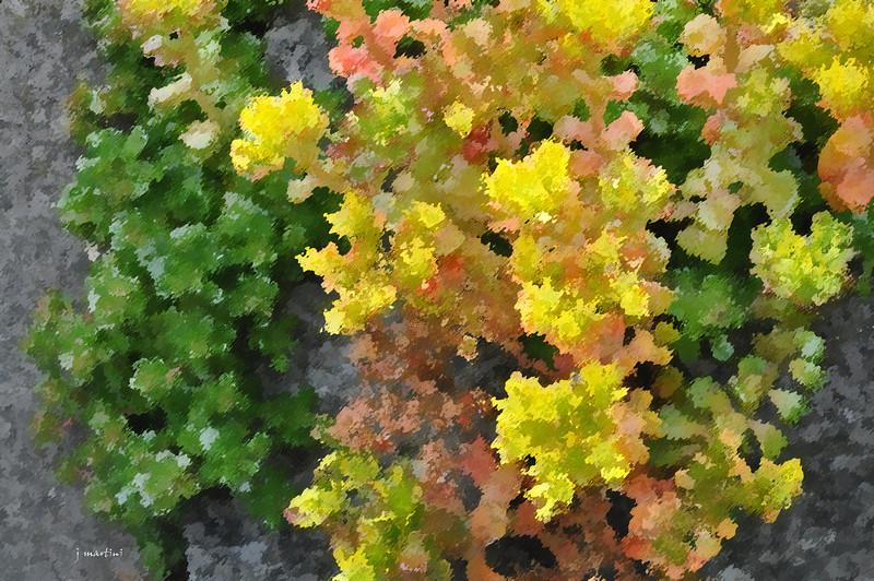 dream gardens 13 2-5-2011.jpg