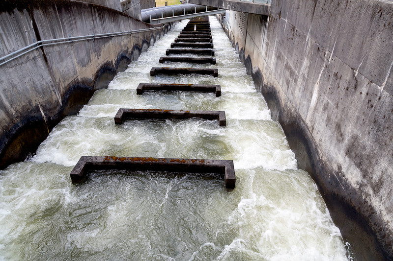 A fish ladder at Bonneville Dam