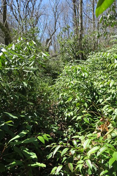 Little Green Creek Trail - 3,900'