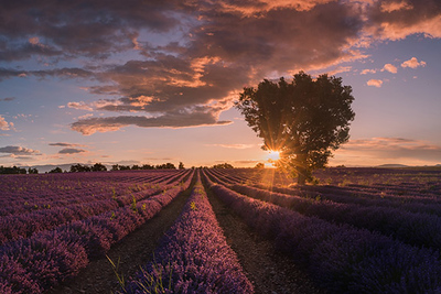Provence Lavender Paradise Photo Tour