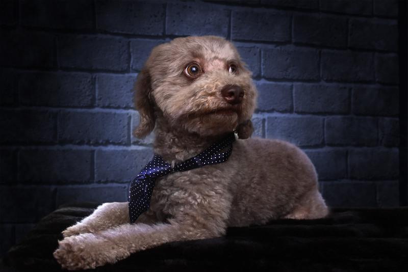 Gordon-dog-2.jpg