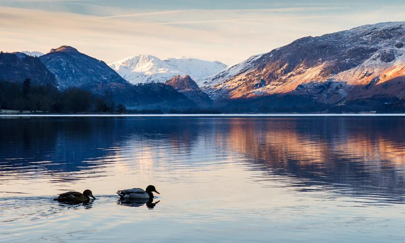 Ducks on Derwent Water lake