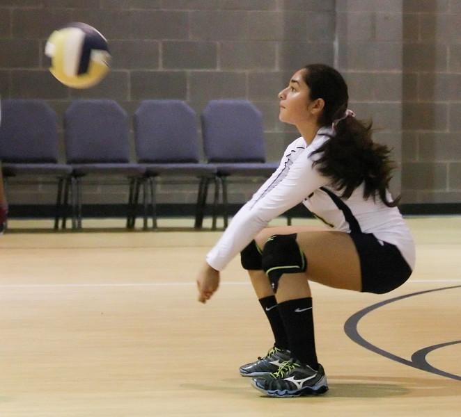 VCA-Volleyball-200.jpg