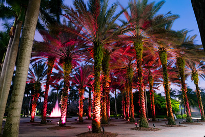 University Of Miami Landscapes