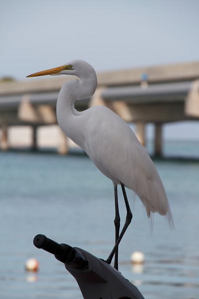 Key West 2012
