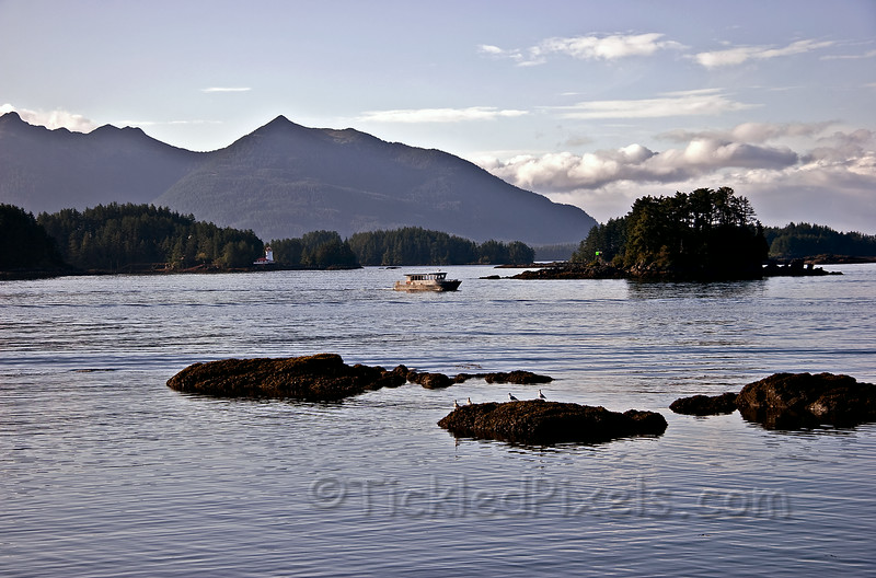 Morning Commute in Sitka Sound