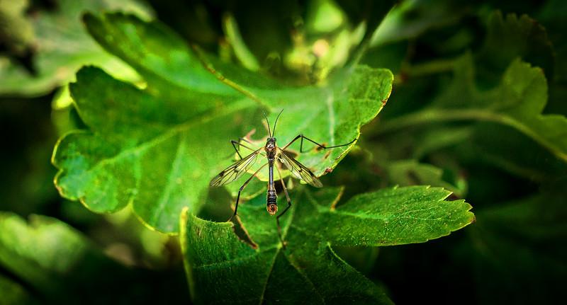 Bugs and Beetles - 8.jpg