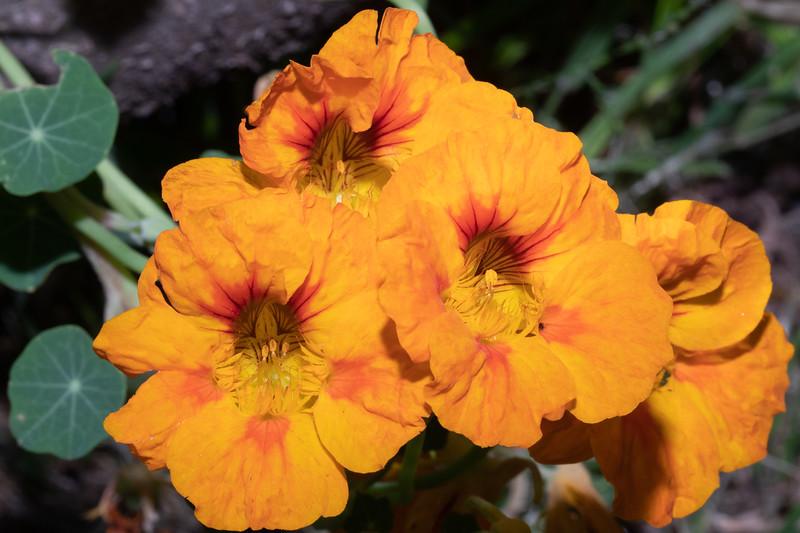 orange2-9750.jpg