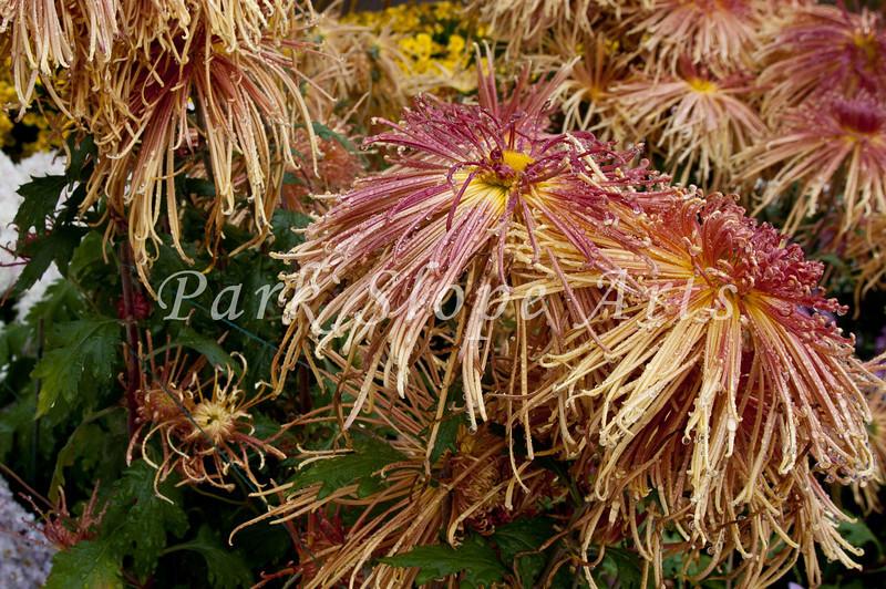 FlowersR-6561.jpg