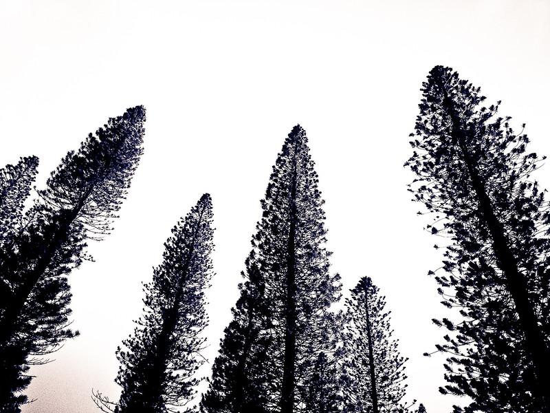 four seasons lodge trees.jpg