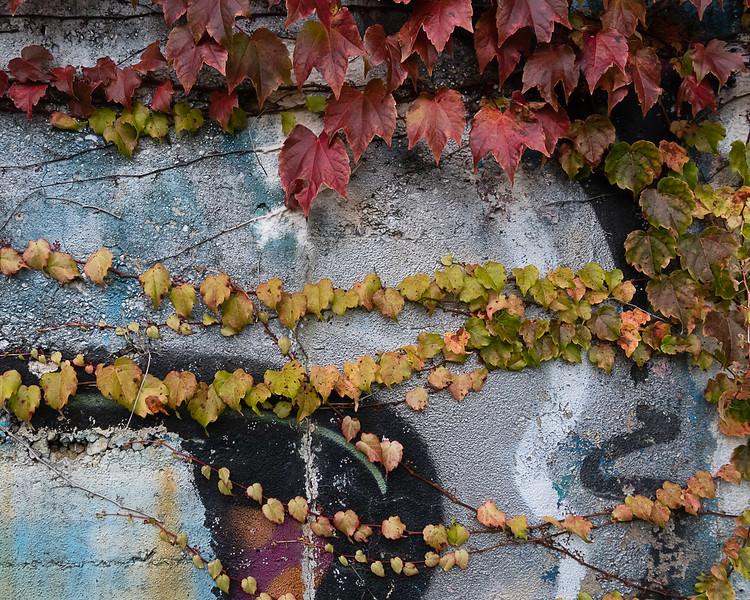 Ivy and Graffiti