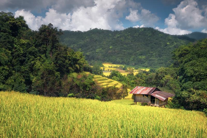 Fields of Yields || Doi Inthanon