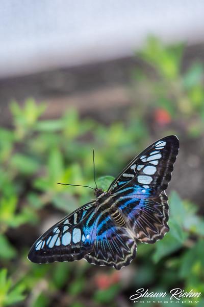 Butterfly-260.jpg