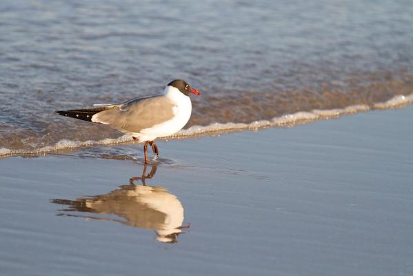 Birds at Ormond Beach Mar 15 2013
