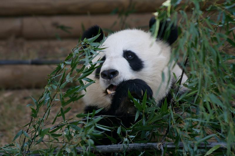 Atl Zoo_IMG_1755