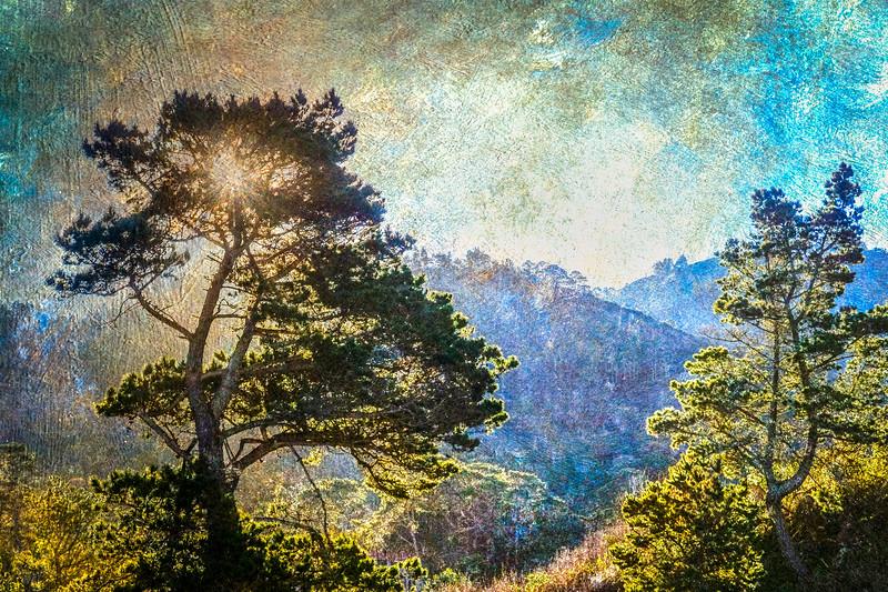 Monterey Pines, Point Lobos State Reserve, Carmel