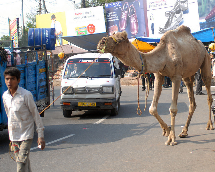 A boy walking his camel, in traffic, at the entrance to the western gate of Taj Mahal in Agra.