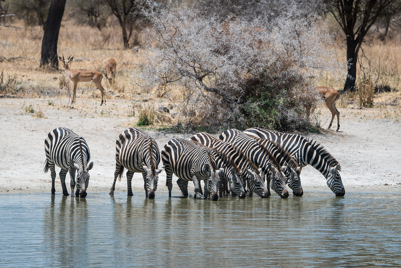 Tarangire National Park watering hole -0010.jpg