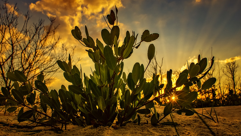 Sunrise and Sunset (15).jpg