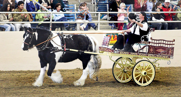 Gypsy horse and cart.